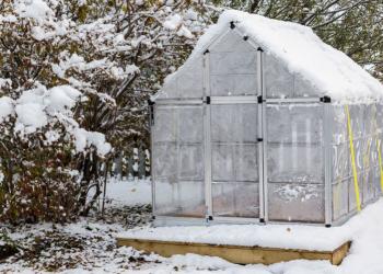 Guide pratique pour planter sous serre en hiver