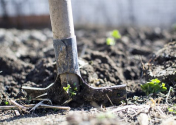 Que peut-on planter en avril au jardin ?