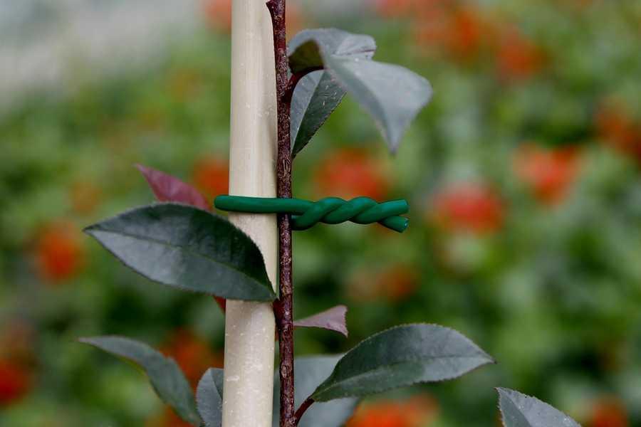 Lien mousse BIFLEX pour plantes fragiles - ø 5 mm