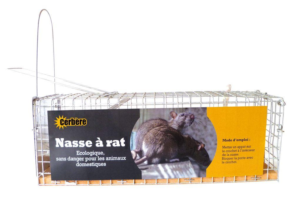 Nasse A Rats 1 Entree