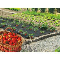 """Film de paillage spécial fraises """"Fresafilm"""" - 1,40 x 10 m de marque NORTENE , référence: J4687100"""