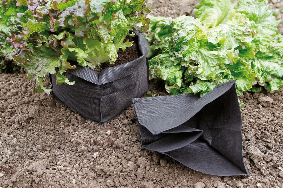 Lot de 12 sacs de protection pour salade \
