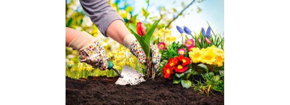 Planter et travailler le sol
