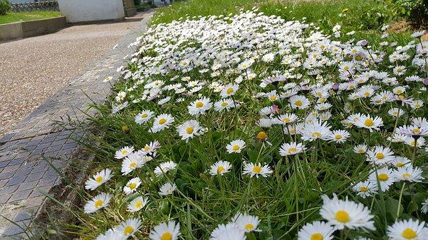 une bordure fleurie de jardin