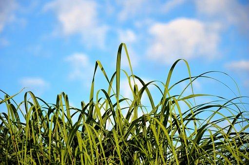 L'entretien du gazon pour une belle pelouse