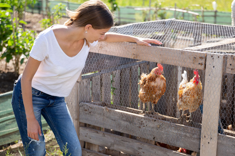 Vous vous intéressez à l'élevage de volailles et souhaitez installer un poulailler dans votre jardin ? Découvrez tous nos conseils pour ce faire.