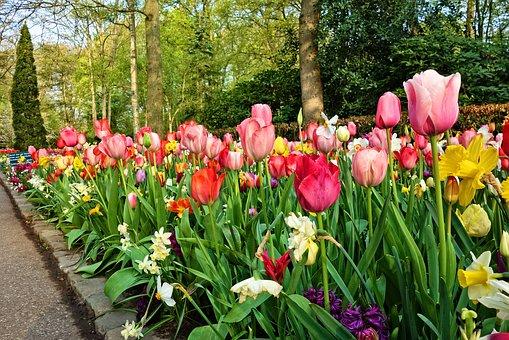 massif de fleurs et bordure de jardin