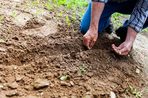 Quand faire les plantations ?